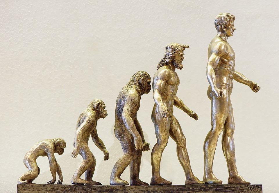Evolutie geschiedenis